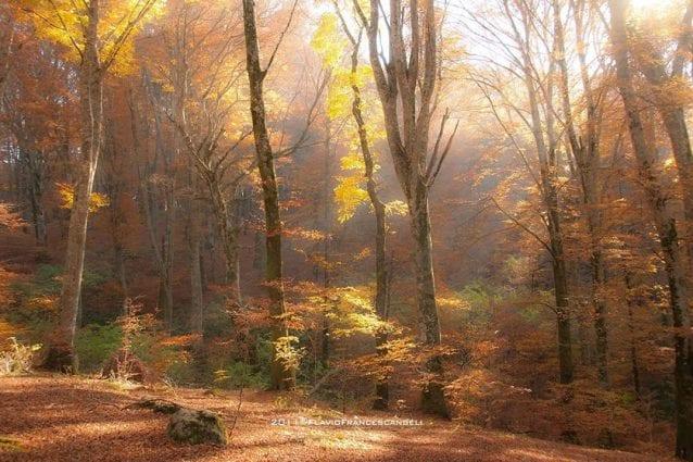 Foliage nel Lazio: cinque posti dove vedere i colori dell'autunno