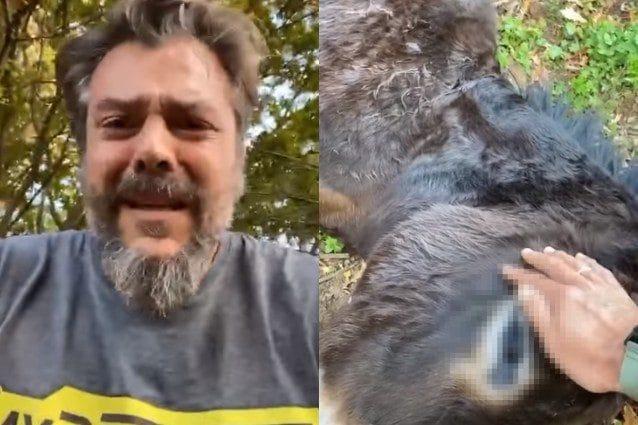 Un cacciatore ha sparato senza scrupolo e ucciso una delle mie asine