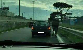 Casamonica in macchina porta a spasso il cavallo sulla Circonvallazione Orientale