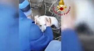 Cuccioli rimangono intrappolati nella tana dell'istrice sulla spiaggia: salvati dai pompieri