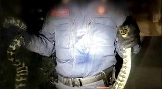 Pitone australiano si introduce in una villetta: catturato era lungo un metro e mezzo
