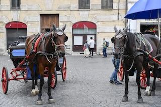 Botticelle a Roma: bloccato il regolamento del Campidoglio, cavalli restano in strada
