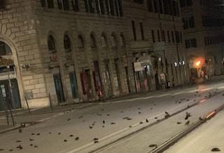 Roma, uccelli spaventati da botti Capodanno si schiantano su fili alta tensione: morti a centinaia