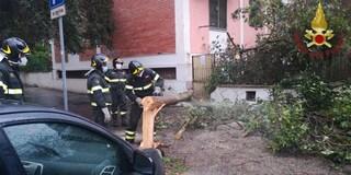 Maltempo a Roma, 100 interventi dei vigili del fuoco per alberi o rami caduti