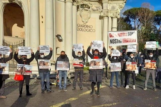 La protesta degli animalisti davanti ai cancelli del Bioparco di Roma