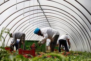 """Latina tra capolarato e sfruttamento del lavoro agricolo: """"Braccianti pagati 2 centesimi a mazzetto"""""""
