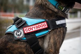 """Cani riconoscono covid dal sudore, al via studio: """"Usati nei grandi eventi al posto del test rapido"""""""