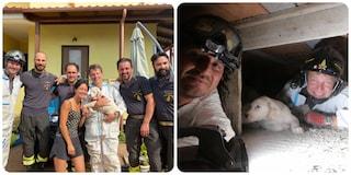 Cucciolo di cane rimane incastrato nell'intercapedine di un villa: liberato dai vigili del fuoco