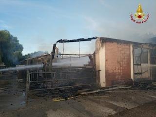 Pavia, incendio in un maneggio a Sant'Alessio: 11 cavalli morti tra le fiamme