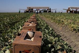 Focolaio in un'azienda agricola di Rodigo: domani l'esito dei tamponi su tutti i 250 dipendenti