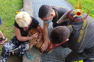 Rho, cagnolino rimane incastrato in una grata: pompieri lo salvano