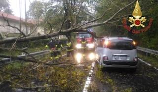 Mornago, albero cade per la pioggia sulla strada provinciale: nessun ferito, danneggiata un'auto