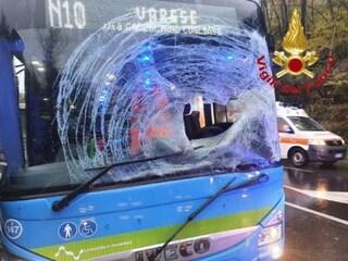 Paura in Valganna, cervo attraversa la strada e sfonda il parabrezza di un autobus