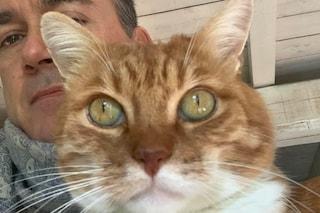 Gatti feriti a fucilate, mistero a Carbonara al Ticino: denuncia contro ignoti