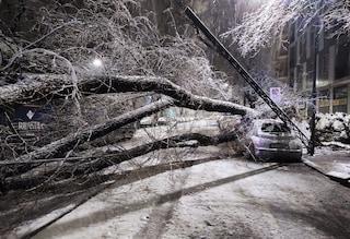 Milano, la neve fa cadere due alberi e un palo: ferita una donna