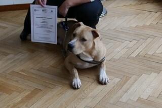 """A Milano consegnati i primi """"patentini cane speciale"""": ecco di cosa si tratta"""