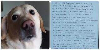 """La """"lettera di Beethoven"""", il cane morto avvelenato al parco: """"Ucciso da chi non sa amare"""""""