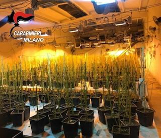 """""""Aspetto mio marito, è nel capannone"""": i carabinieri trovano serra con 950 piante di marijuana"""