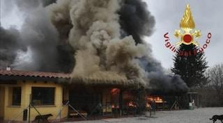 Grosso incendio distrugge un canile, cani salvati dai pompieri: si cerca per loro una nuova casa