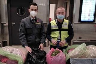 Milano, sbarca a Malpensa con 18 chili di khat in valigia: arrestato