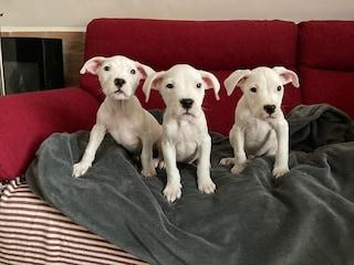 Monza, crescono e sono pronti all'adozione i cuccioli trovati in un sacco dei rifiuti