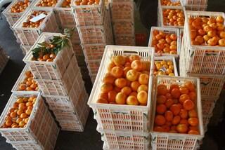 Carugate, truffa e rapina gli anziani fingendo di vendere frutta e ortaggi: arrestato
