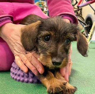 Salvano una cagnolina destinata a essere soppressa: il gesto eroico di due ragazzi brianzoli