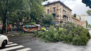 Maltempo a Milano, cade un grosso albero in strada: tanta paura ma nessun ferito