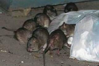 Milano, all'asilo escrementi di topo e infiltrazioni dal soffitto: bimbi a casa e genitori infuriati