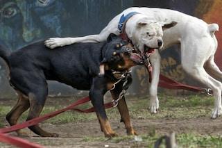 Chiari, terrore in strada: cani fuggono dal giardino di casa e azzannano tre passanti