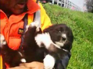 La cagnolina tratta in salvo