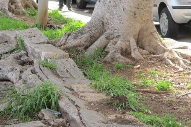 signora che risale un albero 420 sesso Sydney
