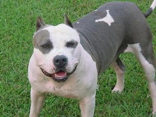 Milano, nuovo regolamento animali: vietato collare a strozzo, stop obbligo museruola nelle aree cani