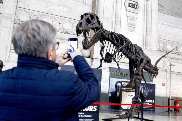Stan, il più grande T–Rex al mondo (LaPresse)
