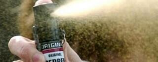 Milano, spray al peperoncino nei corridoi a scuola: professoressa finisce in ospedale