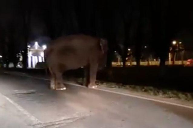 L'elefante in mezzo alla strada (Frame del video di Massimo Giunta)