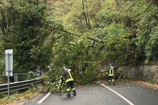 Maltempo, vento forte e grandine in Valtellina: alberi sradicati e disagi a Piantedo e Morbegno