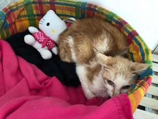 Gatto viaggia dalla Cina a Milano chiuso in un container per 45 giorni: scoperto alla dogana