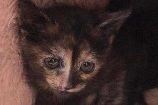 Lissone, tre gattini di venti giorni buttati nella spazzatura: sono salvi e stanno bene