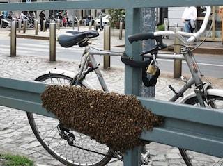 Milano, con il caldo arrivano le api: la città è invasa dagli sciami, intervengono gli apicoltori