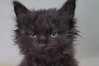 Bergamo, il gattino Fuliggine rimane incastrato nel motore di un'auto: lo salvano i vigili del fuoco