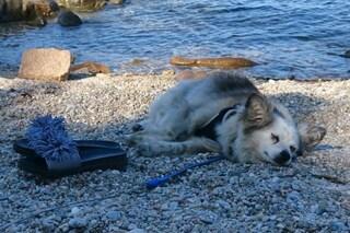 Sesto San Giovanni, cagnolina Nina investita e uccisa da un'auto: caccia al pirata della strada