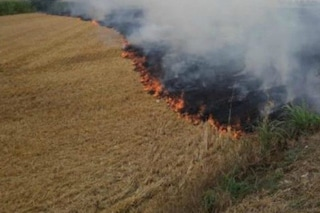 Solferino, scoppia un incendio nei campi: tra le sterpaglie i vigili trovano 20 chili di hashish