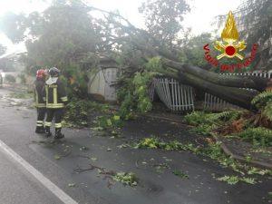 L'albero caduto a Gessate (Milano). Foto dei vigili del fuoco.