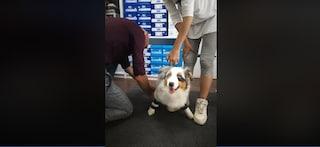 La storia di Alex, il cucciolo senza zampe: via alla raccolta fondi per le protesi bioniche