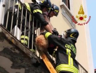 Milano, vigili del fuoco salvano un cane lasciato sul balcone sotto il sole