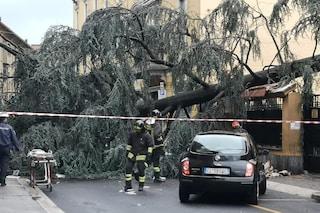 Maltempo in Lombardia, albero crolla sulla strada a Monza: feriti una madre e i due figli