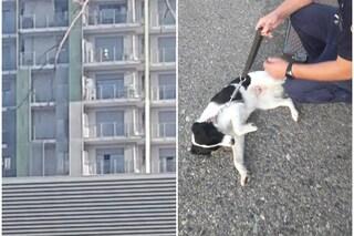 Milano, cane lasciato per ore sul balcone sotto il sole di Ferragosto: salvato da vigili del fuoco