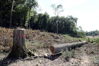 Si lancia in un dirupo a Madesimo per non essere schiacciato da un tronco: grave boscaiolo 23enne