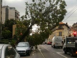 Nubifragio a Milano: pioggia, grandine e forti raffiche di vento. Caduti alcuni alberi